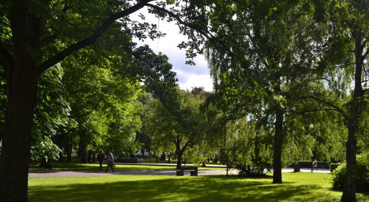 park, trawa, drzewa