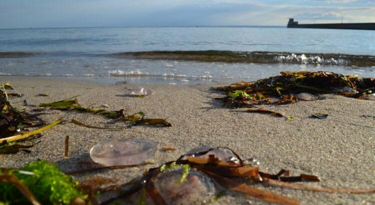 plaża, morze, lato, rośliny, meduzy, piasek, fale, niebo
